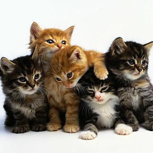 Post Thumbnail of Кототерапия. Релаксация с котятами! Очень круто, видео!