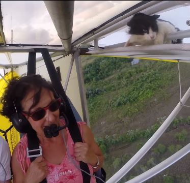 Post Thumbnail of Удаляйте котов с параплана перед полетом! Видео