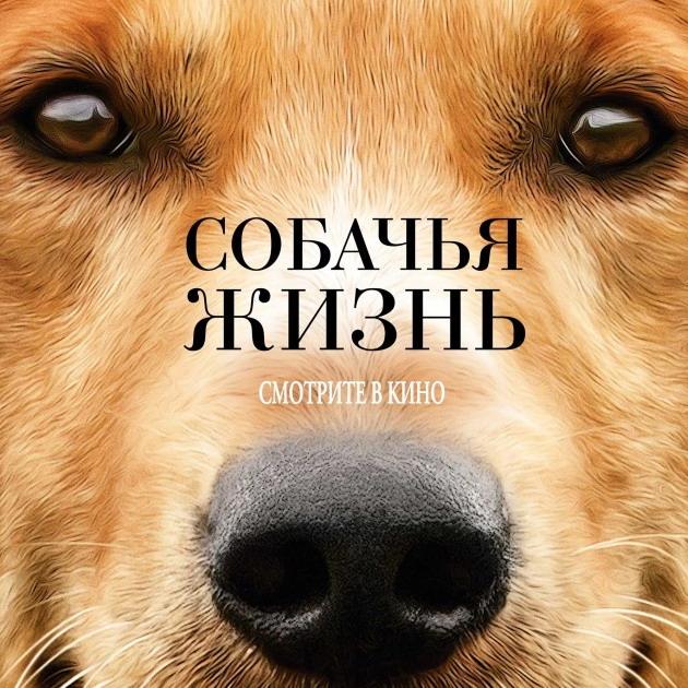 Post Thumbnail of Фильм Собачья Жизнь - отзыв без спойлеров